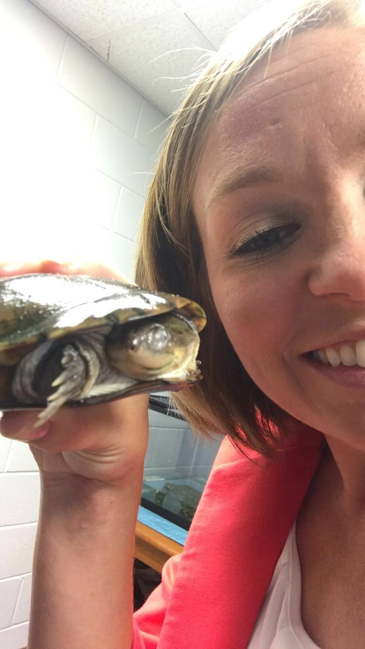 Mrs. Furney display's the school's Turtle, Shelly