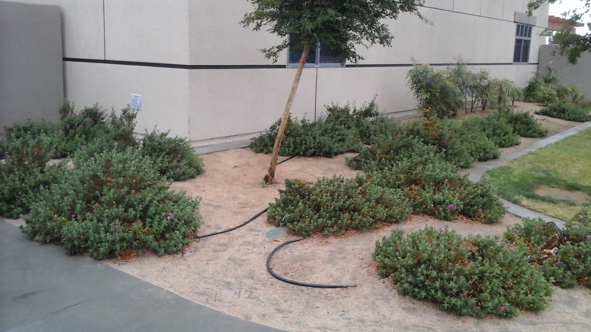Drought resistant plants project - Jacob Wiens