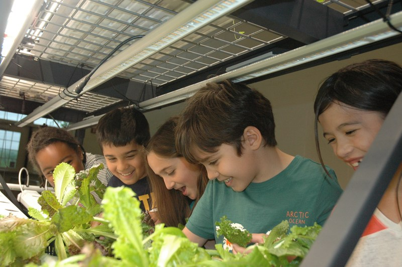 HES students working in greenhouse