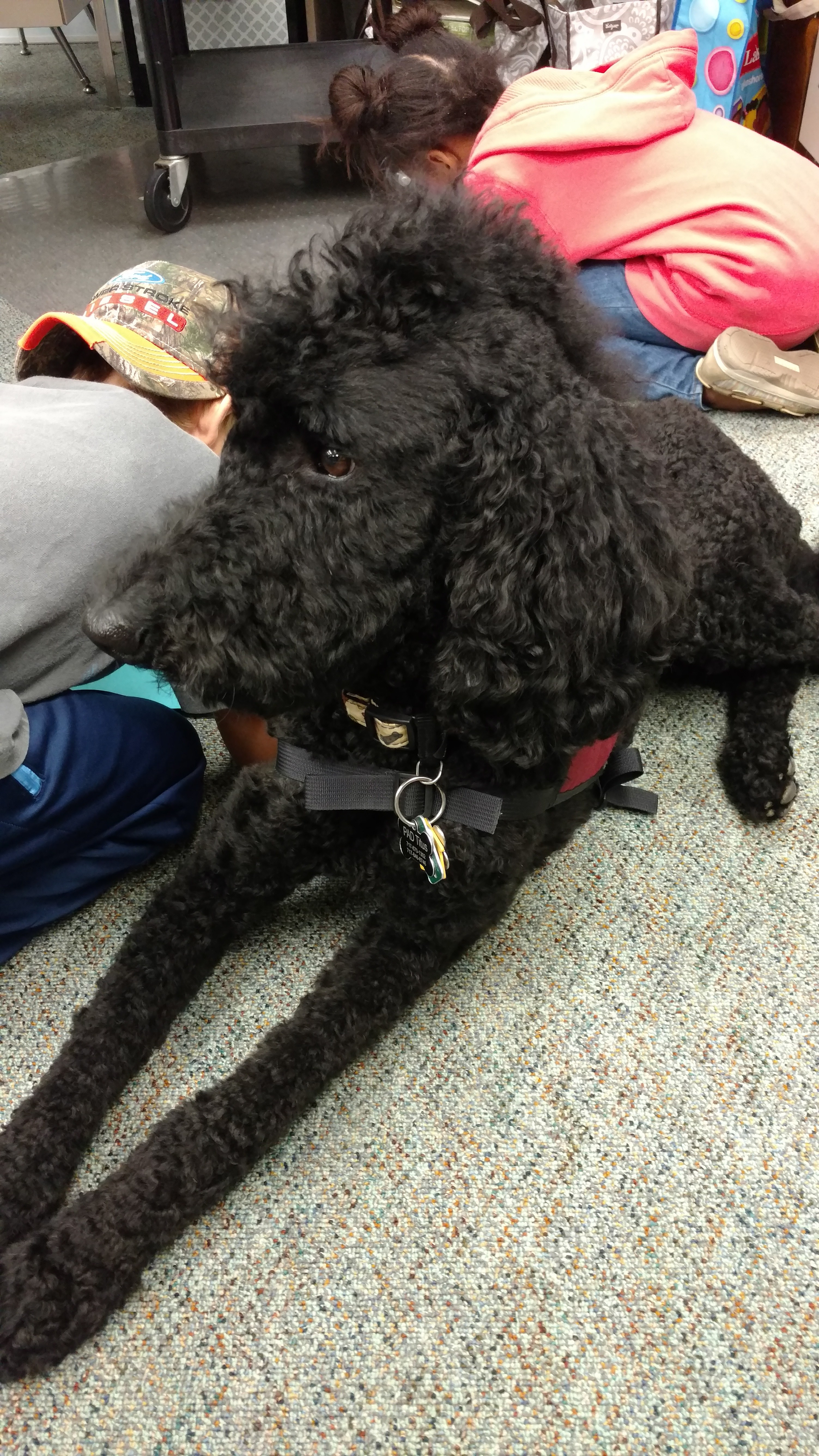 Titus, our service dog