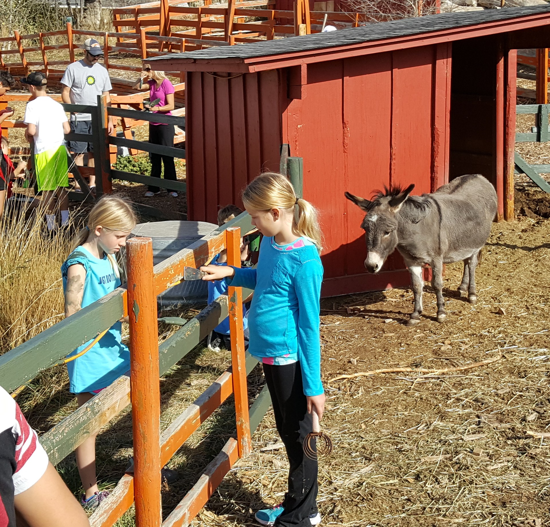 students paint and scrape a fence with a donkey in the background