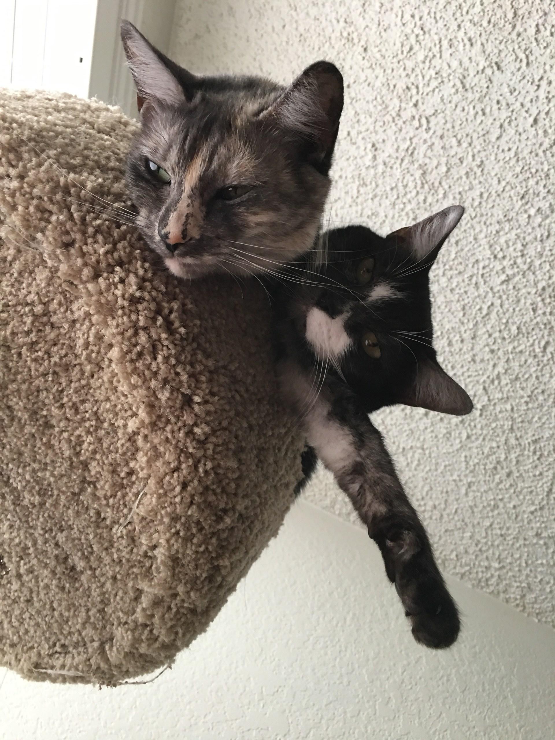 Arya and Athena in their kitty condo.