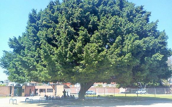 El Colegio Marista  de la zona oriente de Guadalajara Image