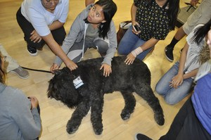 Members of Sierra Vista High School's NAMI Club gather around Gunny, a 100-pound therapy dog, after a presentation to the group on Oct. 23.
