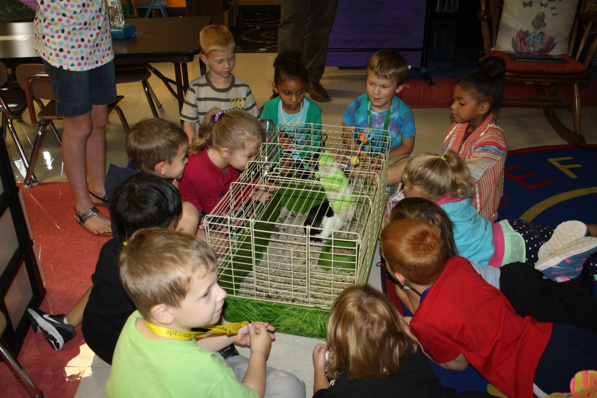 Guinea pig visit