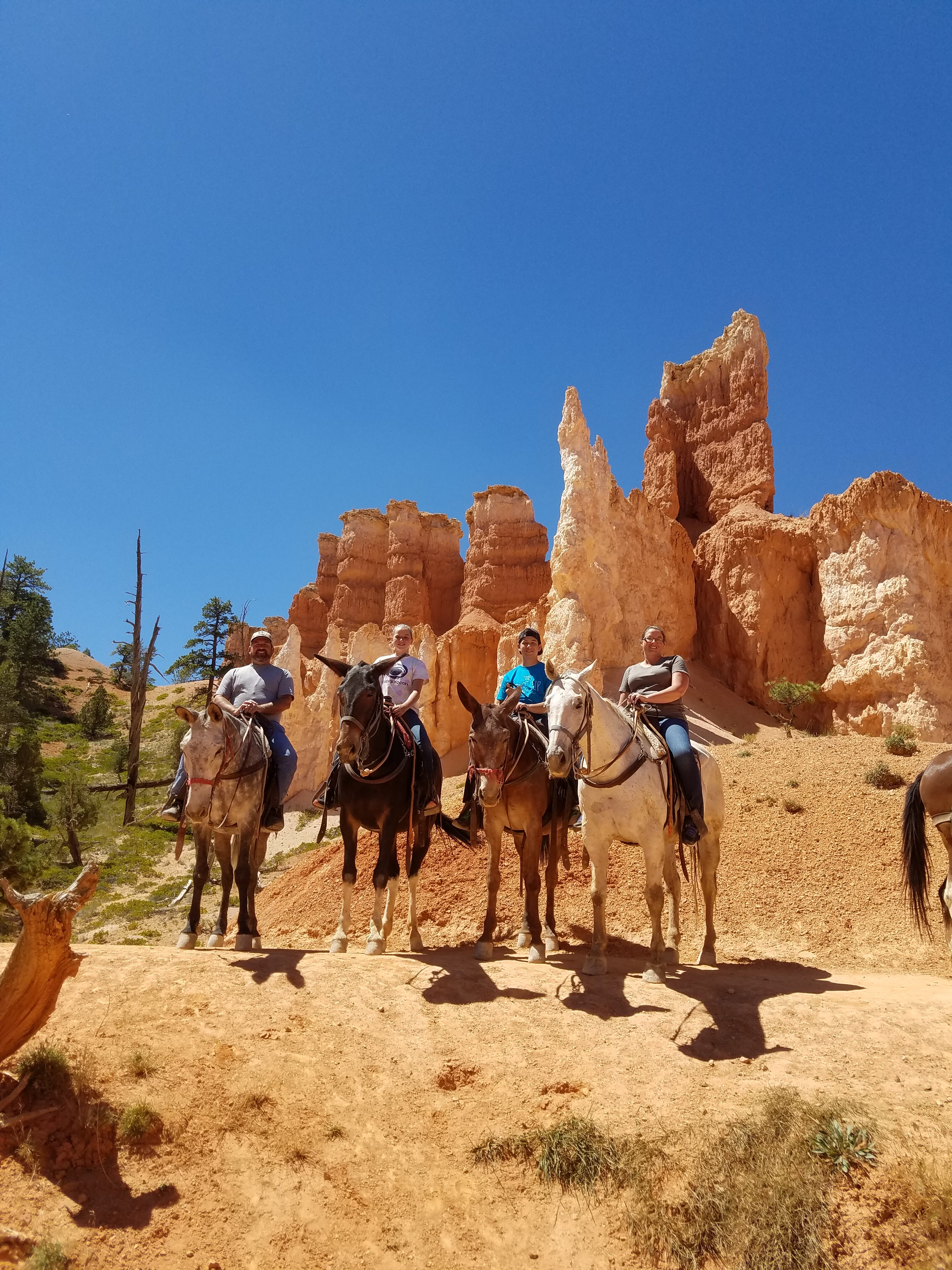Riding horses and donkeys through Bryce Canyon
