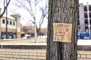 Lost Cat Sign