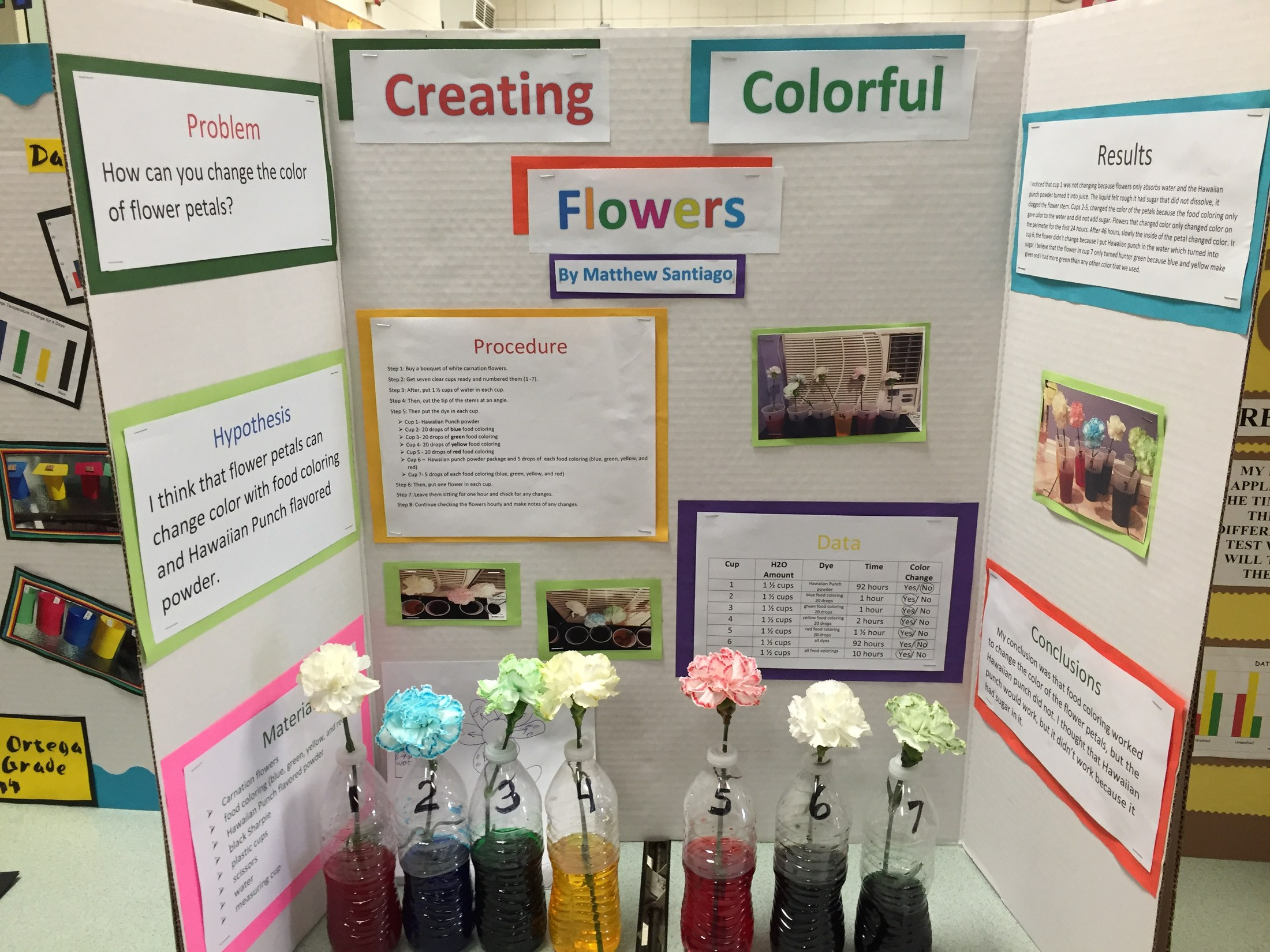Flower science fair projects flowers ideas for review for How to dye flowers using food coloring