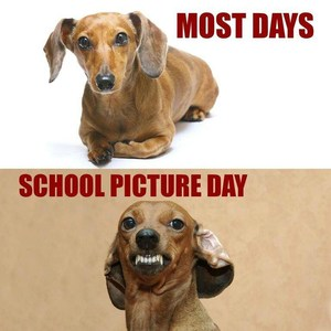 Dog grins for picture day