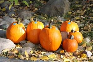Photo of pumpkins.