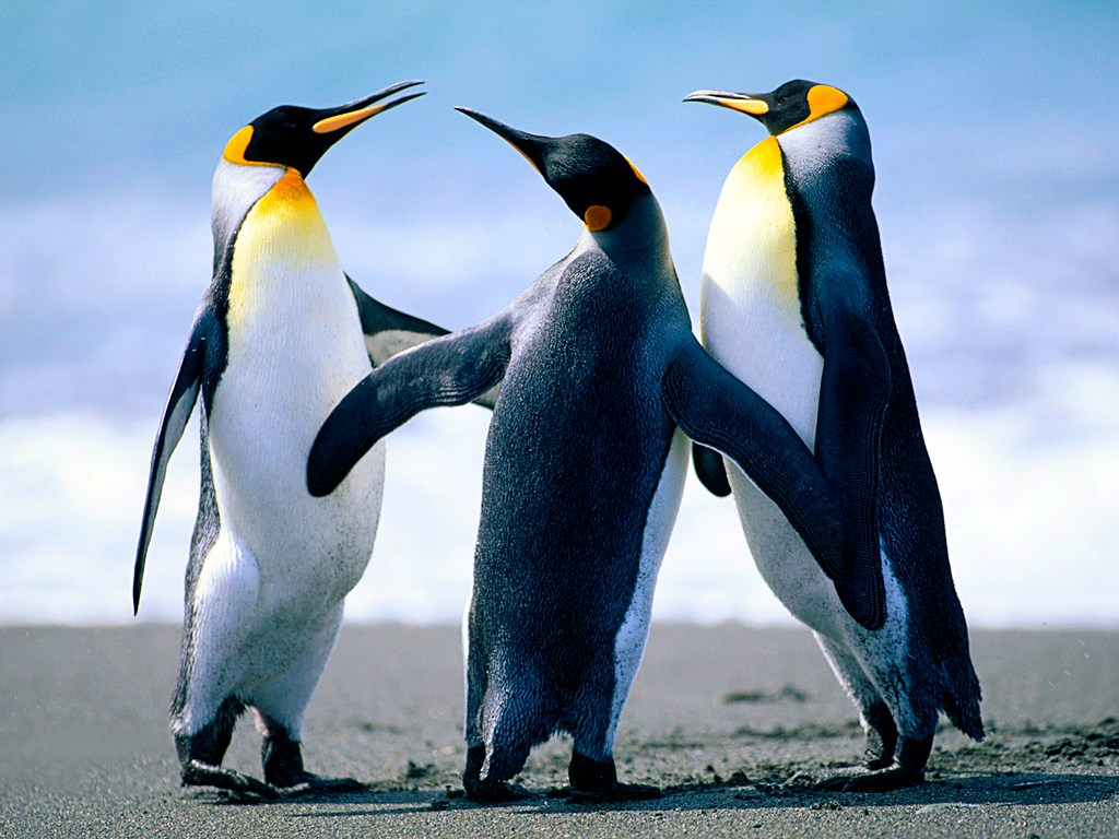 Penguins playing