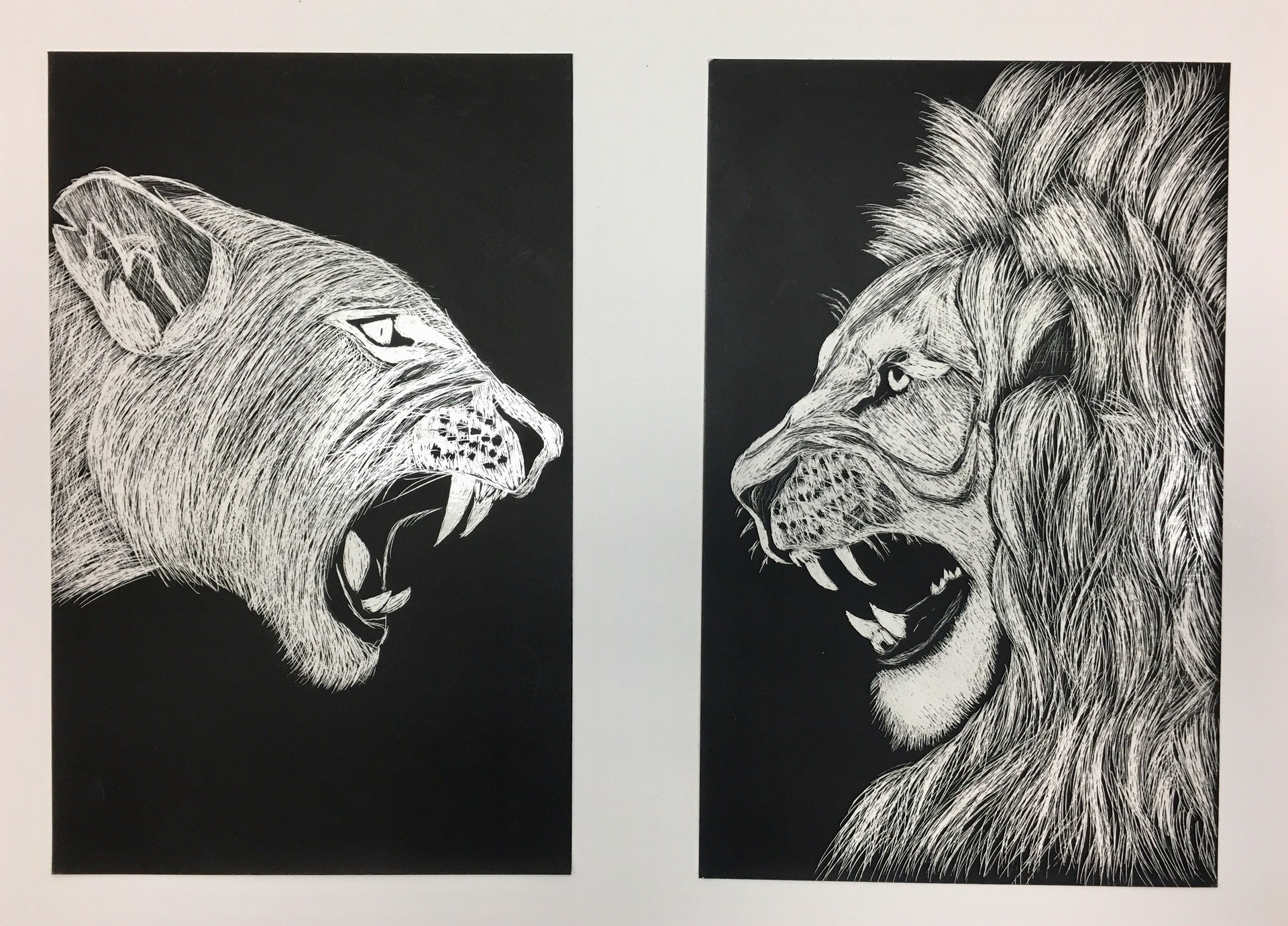 black and white drawing of a lion and a tiger