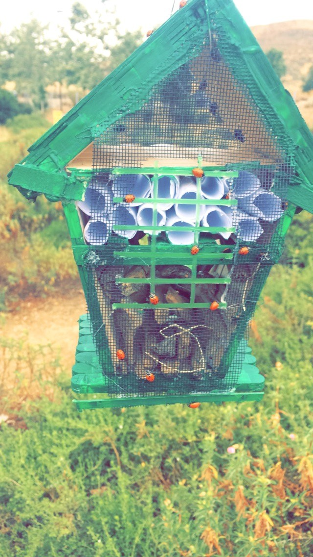 build a ladybug house that is part habitat and a shipping container for ladybugs