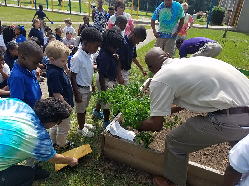 McLaurin gardens are off to a great start! Thumbnail Image