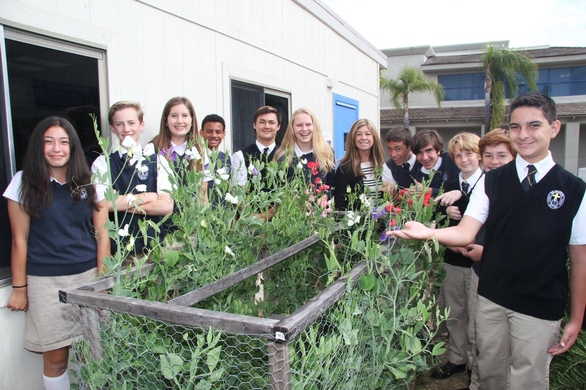 grade 7 students genetics science lesson growing sweat peas