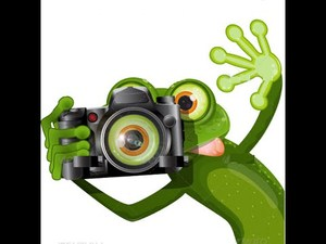 Picture frog.jpg