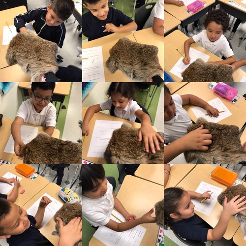 Students touching fur.