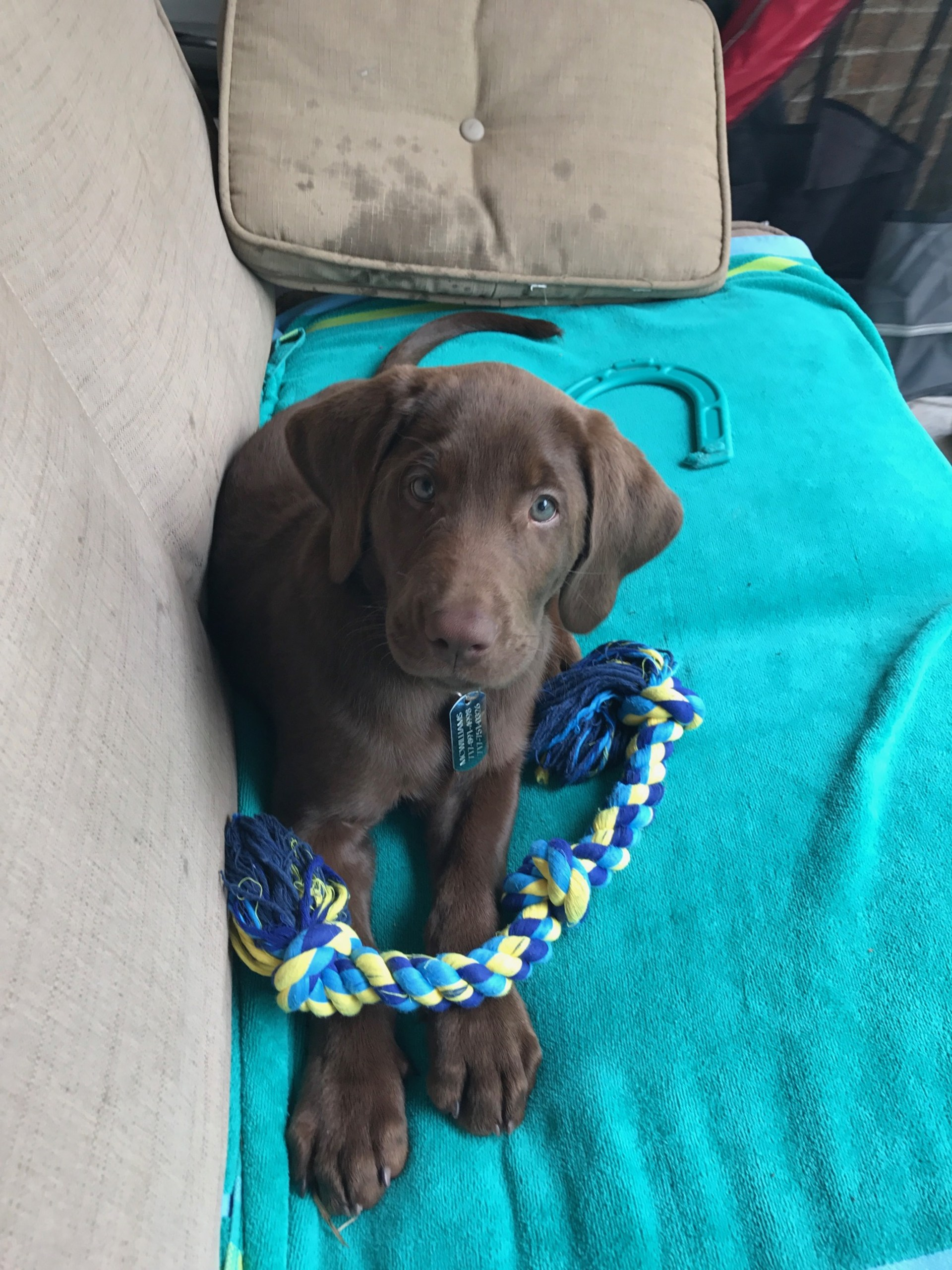 Mrs. McWilliams puppy Scout