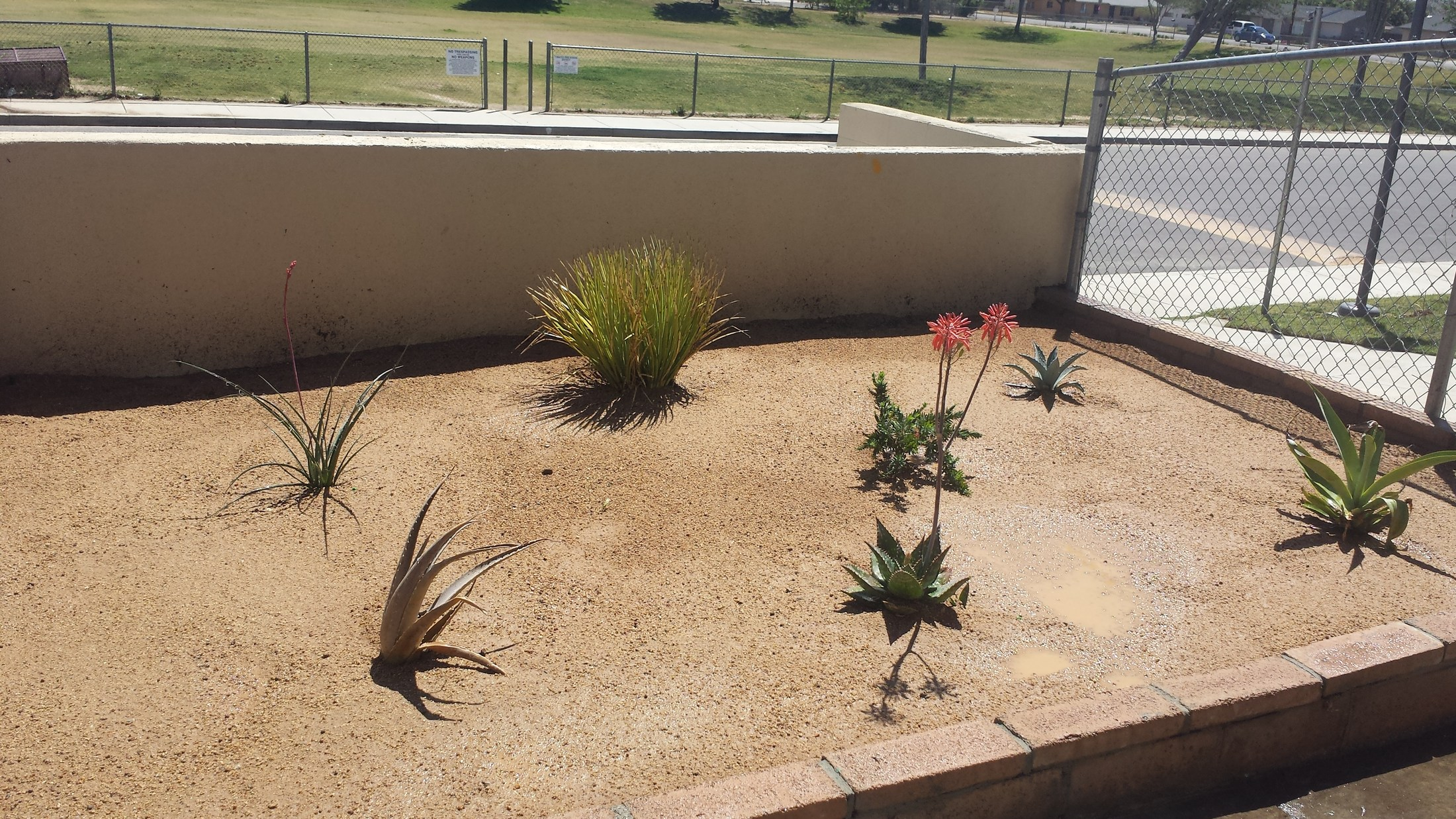 Drought Resistance Plant Project