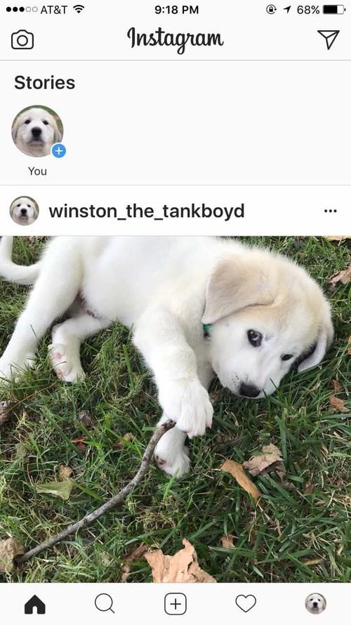 Winston the tankboyd