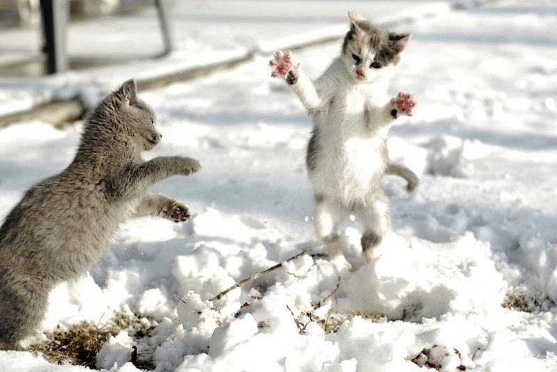 two cats playing in snow