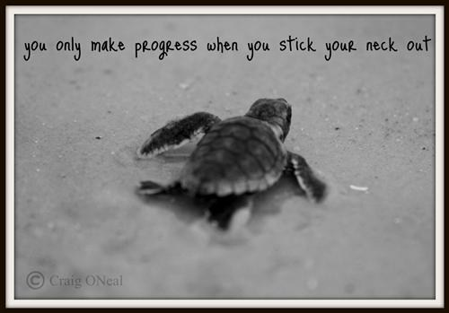 Turtle You only make progress when you stick your neck out