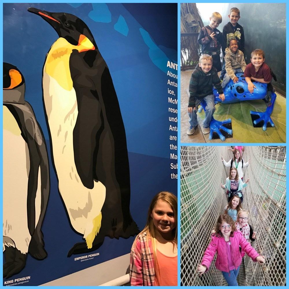 May 2017 2nd grade Living Aquarium