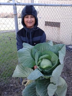 Bonnie Plants Cabbage Growing Contest