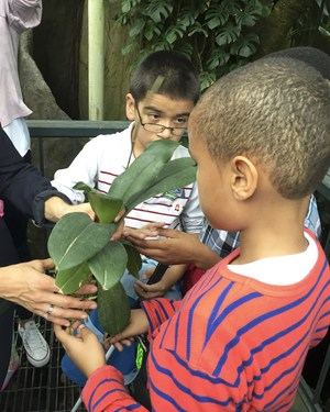 students exploring a rainforest plant.