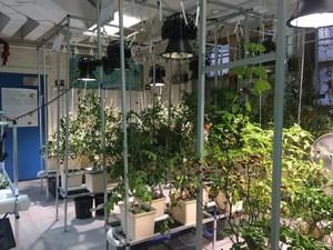 hydroponics lab 4
