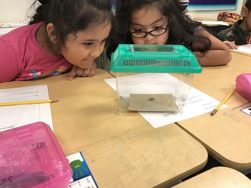 Students looking at a terrarium with a cricket inside.