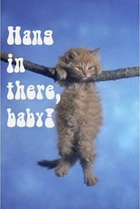 Hang in there, baby cat