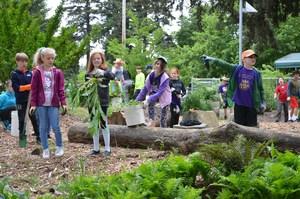Fourth Graders weeding at SnowCap