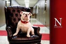 Go Bulldogs!