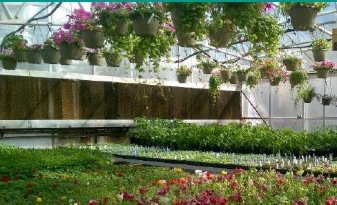 CHENEY FFA PLANT SALE Thumbnail Image