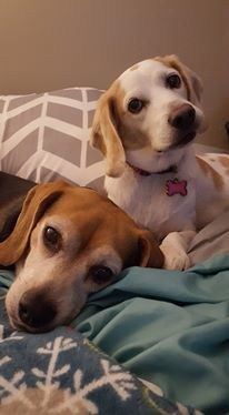 My two dogs, Emma Belle and Bailey