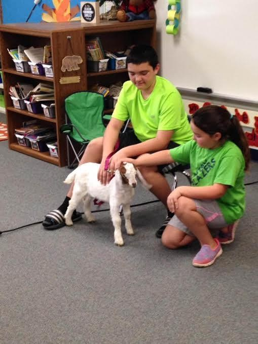Show and tell with a friendly goat