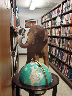 Elephant in library shelving books