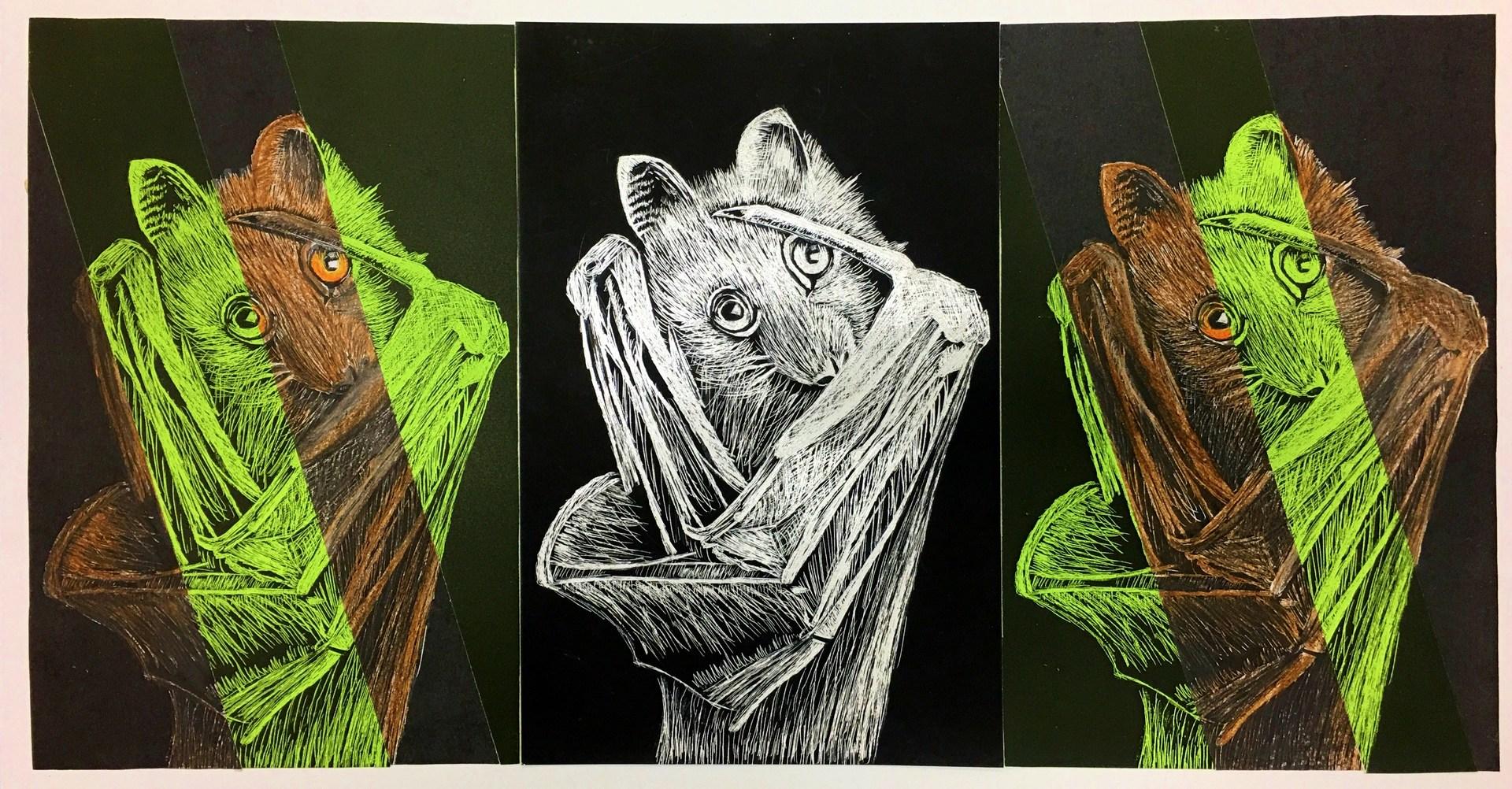 drawing of a bat