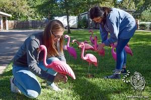 SHS DECA flocking 102517 0439 FH (3).jpg