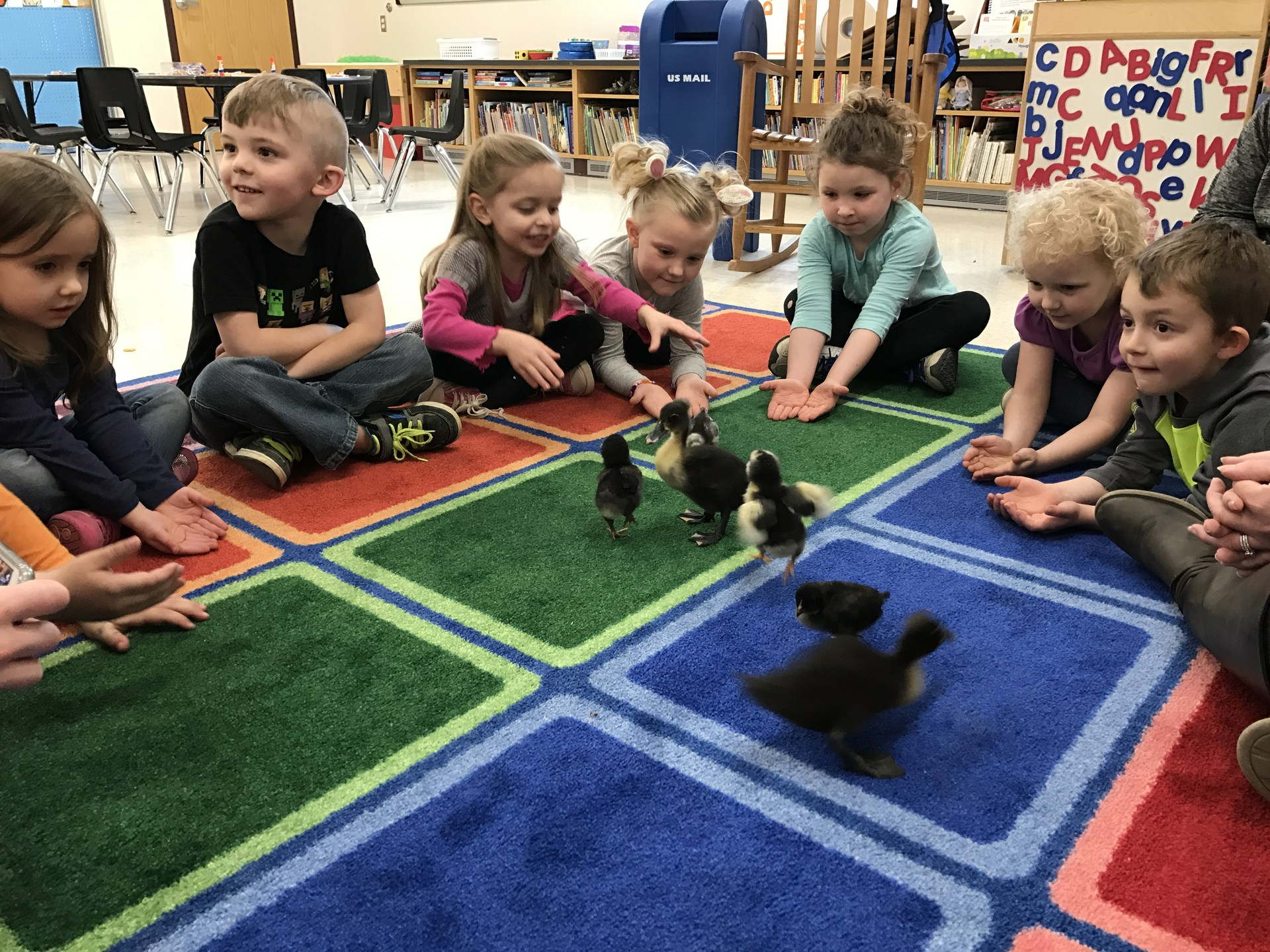 More students with ducks and chicks!