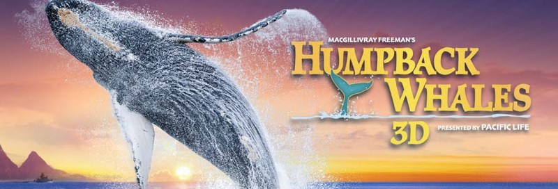 Humpback Whale IMAX