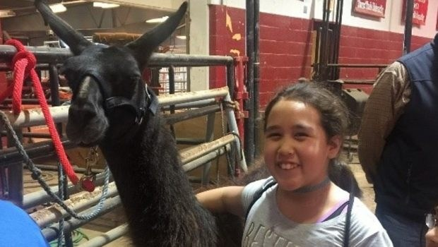 Westwind student and llama