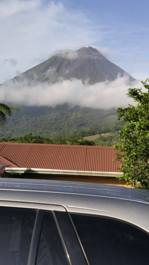 Volcano Arenal (cows).jpg