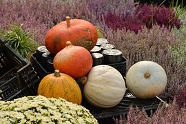 Photo of pumpkins and fall harvest