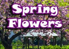 Campus Spring Flowers