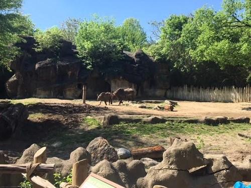 Rhino's at the zoo.