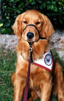 teddy in uniform.jpg