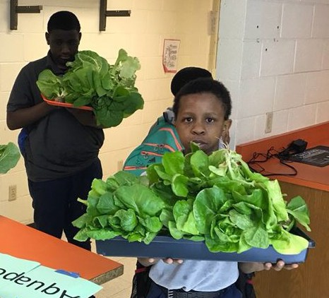 Lancaster Middle School Students Use Aquaponics to Grow Food Thumbnail Image