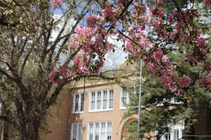 Photo of the front of the District 9-R Administration Building with cherry blossoms in bloom.